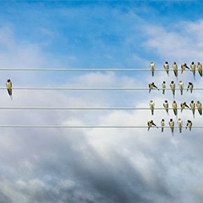 A group of birds on one side of wire lines and only one on the opposite side